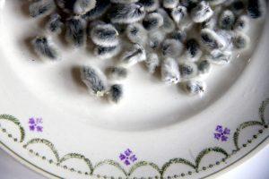 assiette-pompon-saule-la-saladelle