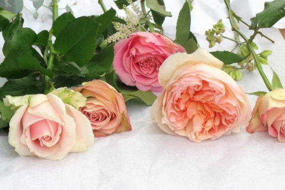 Échantillon de roses - La Saladelle